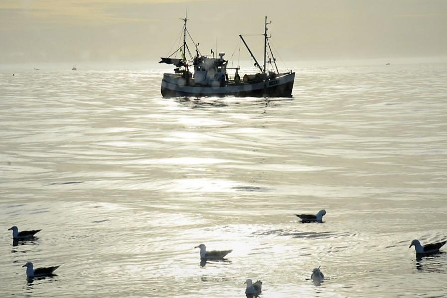 Kystfiskekvoten, og sei