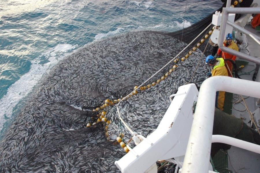 Varmt hav - mindre NVG