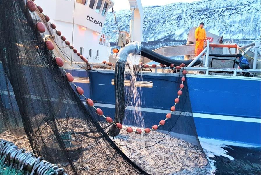 Åpner fjordlinjene