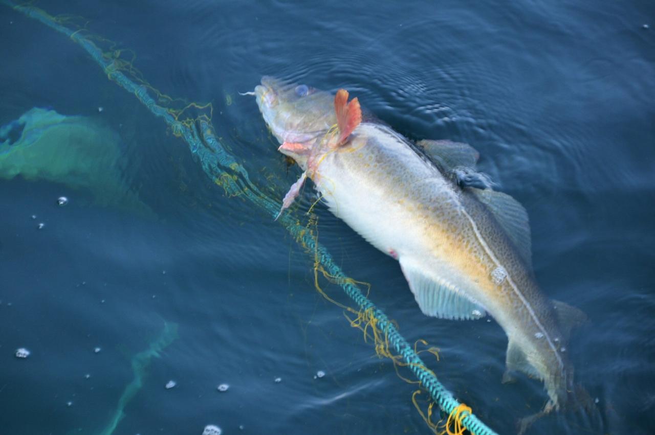 Forlenger ferskfiskordningen