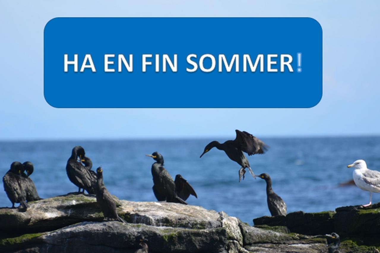 Sommerinfo